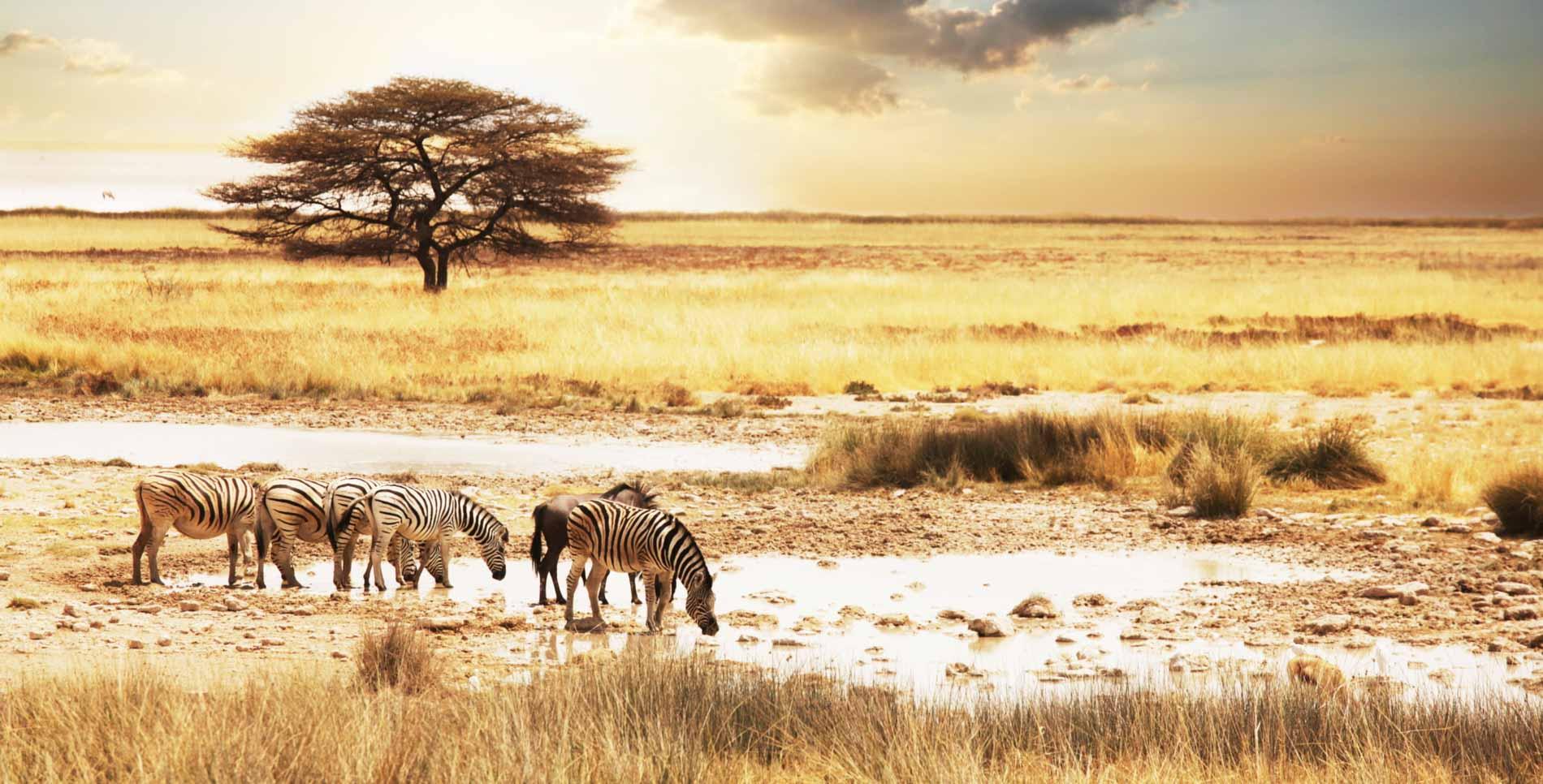 Amarant-Reizen-Header-Zuid-Afrika-1