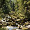 Tsjechie Beheemse woud